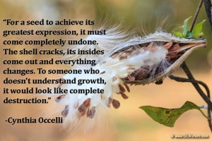 """For a seed to achieve it's greatest expression, it must come completely undone. The shell cracks, it's insides come out and everything changes. To someone who doesn't understand growth, it would look like complete destruction."" -Cynthia Occelli"