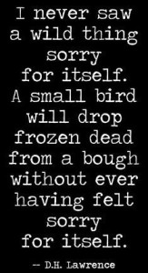"""I never saw a wild thing sorry for itself. A small bird will drop frozen dead from a bough without ever having felt sorry for itself."" - D. H. Lawrence"